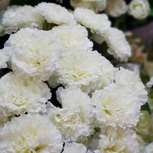 Artificial White Carnation