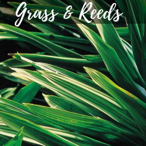 Grass and Reeds