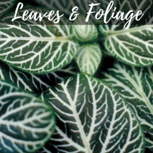 Leaves & Foliage