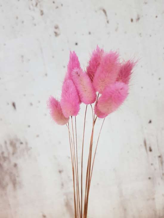 pink bunny tails available for purchase